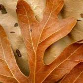 Leaves after Matisse