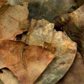 Leaves after Picasso