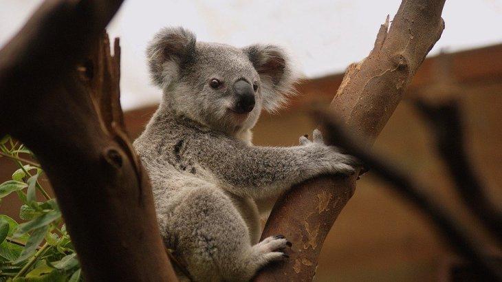 オーストラリア森林火災がついに完全鎮火!ラクダ5000頭を人為的に駆除していた・・・動物113種に支援が必要に