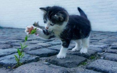 【悪天候の前兆】ネコが顔を洗うと雨が降る理由は?天気と動物の行動・ことわざ「観天望気」一覧まとめ