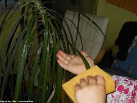 Activité Montessori soigner les plantes