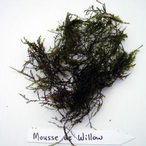 Moussi de Willow