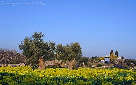 Puglian countryside