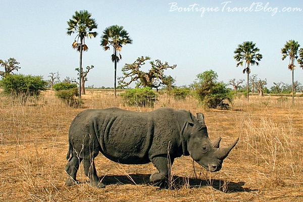 Bandia Reserve, Saly, Senegal