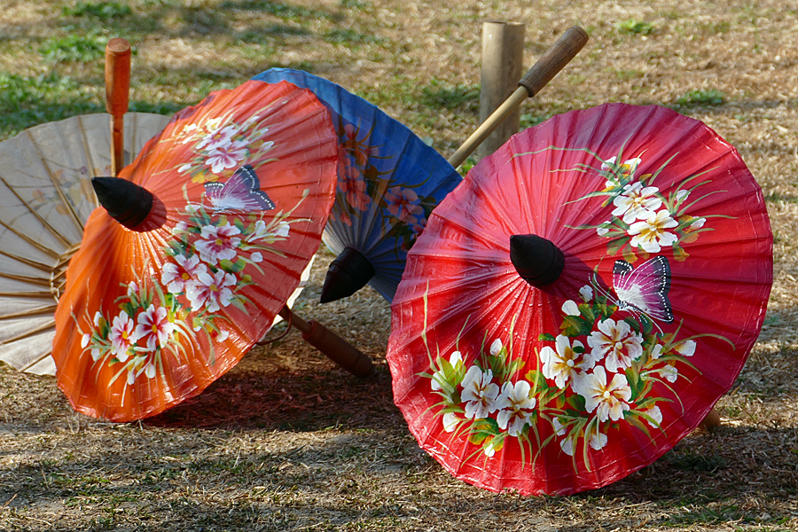 Hand painted parasols drying in the sun, Chiang Mai, Thailand