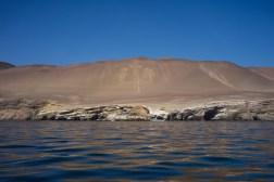 Pérou-Paracas-Ballestas-3