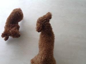ホテル犬の花子ちゃんと遊んでます!