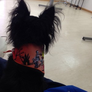 シャンプー後膝に乗ってお迎えを待つココちゃん♡ あったかいです(^_^*)