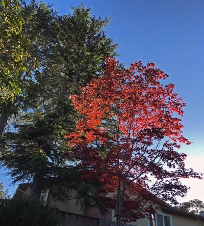 Mr Tree Spring 2016