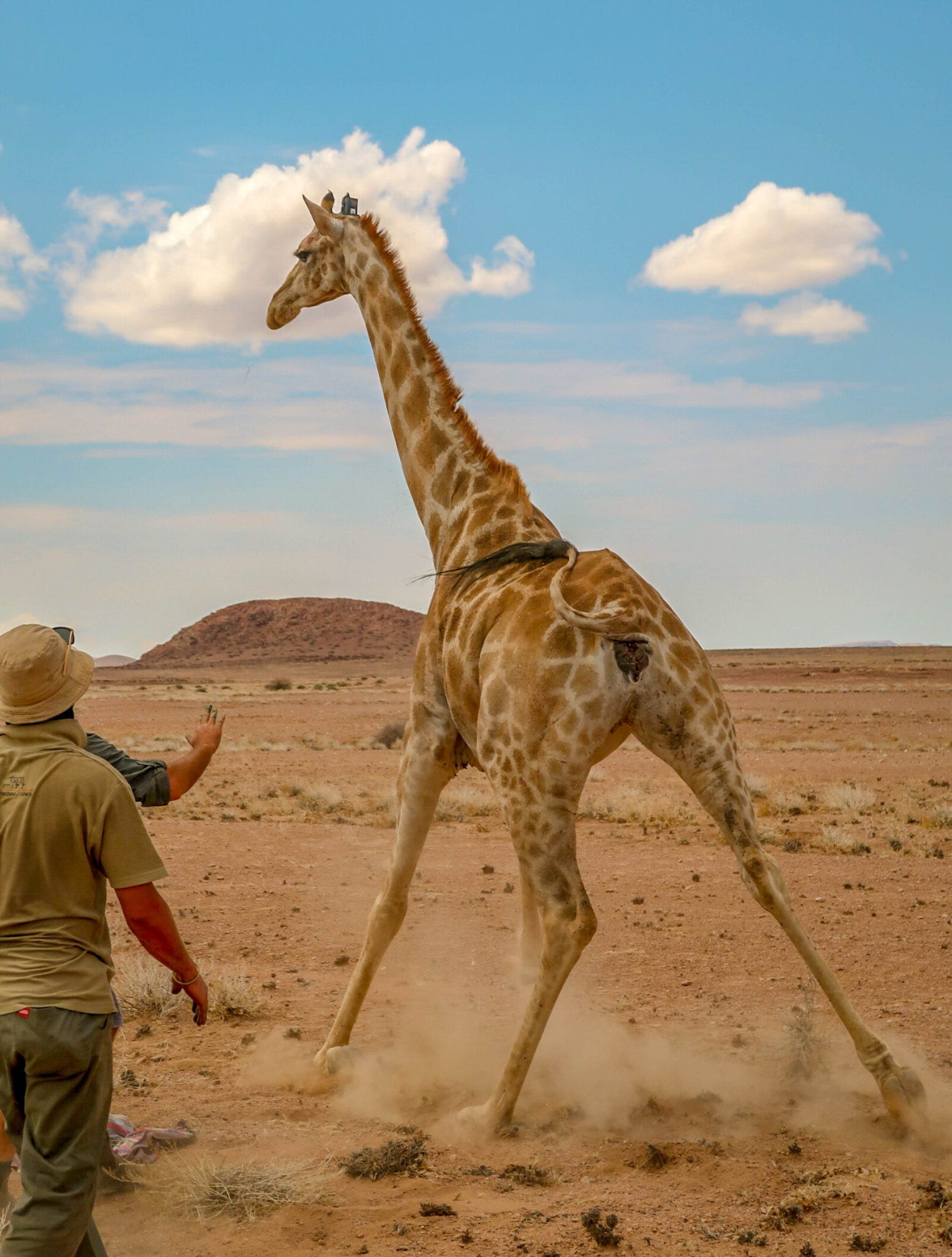 Tracking Giraffe in Namibia