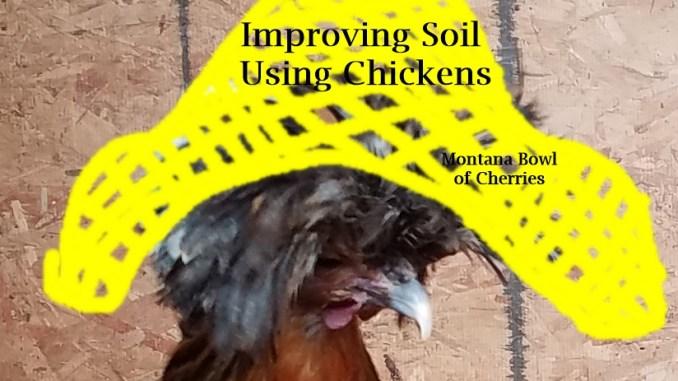 Montana Bowl of Cherries-Chickens and Gardens