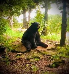 Bowser, American Black Bear