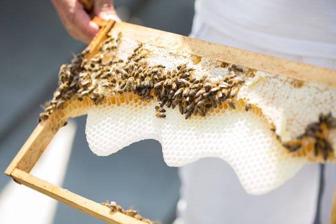 rooftop bees steigenberger herrenhof hotel