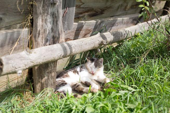 firbas slovenia cat