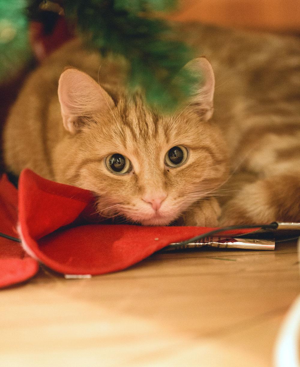 stitchi cat christmas