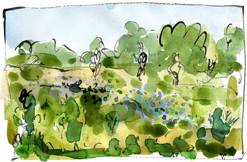 wildflowerfield