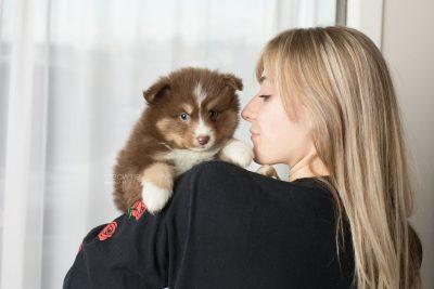 puppy174 week5 BowTiePomsky.com Bowtie Pomsky Puppy For Sale Husky Pomeranian Mini Dog Spokane WA Breeder Blue Eyes Pomskies Celebrity Puppy web7