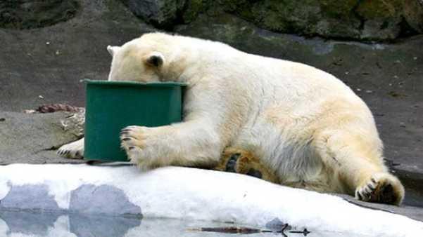 Hungover Bear