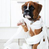 Φυσική θεραπεία για τη διάρροια στα σκυλιά – αιτίες και αντιμετώπιση