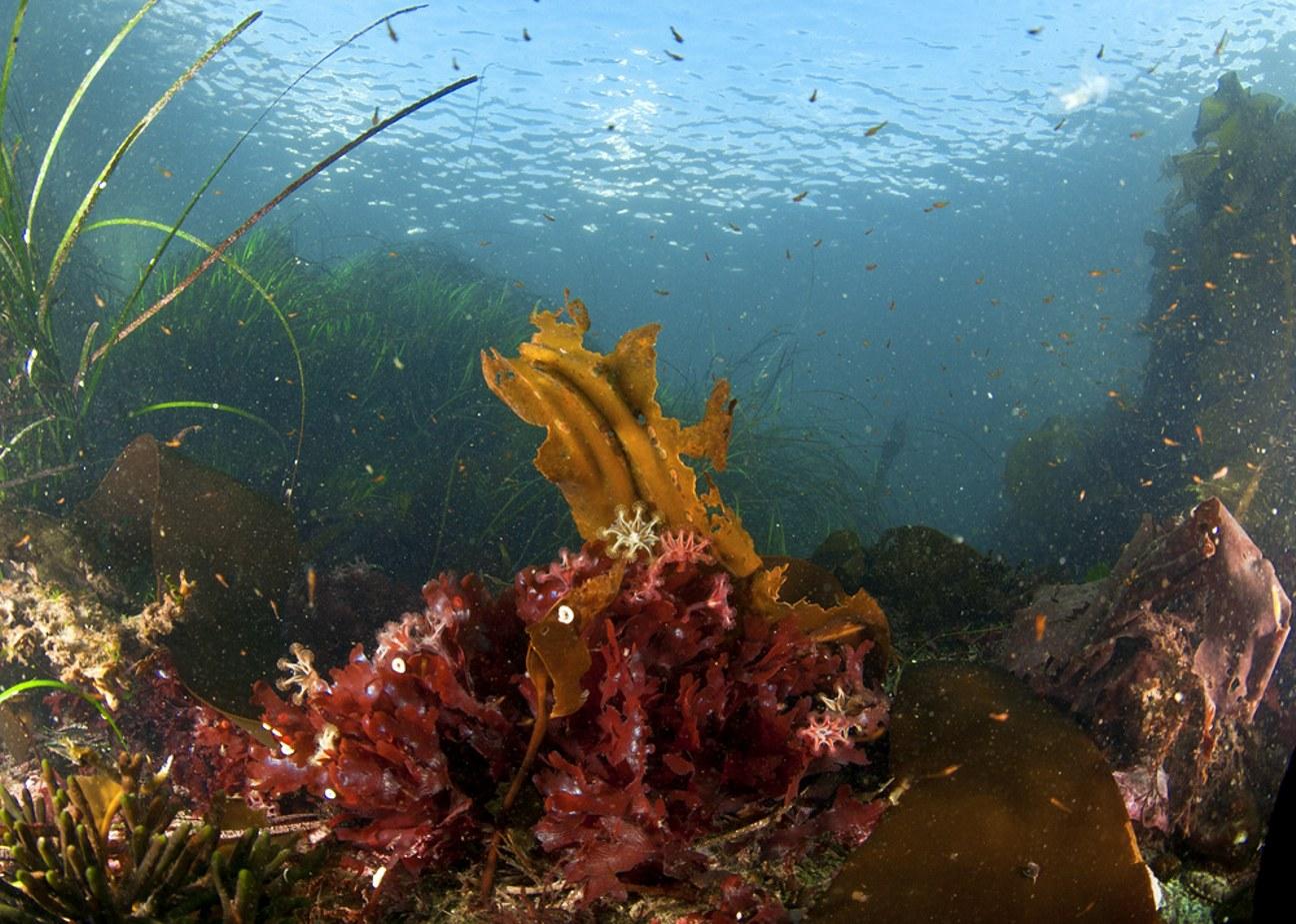 box jellyfish habitat