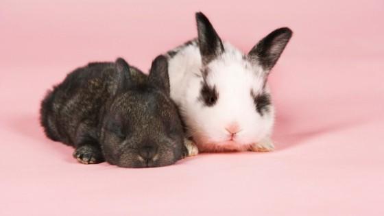 ข้อแนะนำสำหรับผู้เลี้ยงกระต่ายเกี่ยวกับอาการขนร่วง