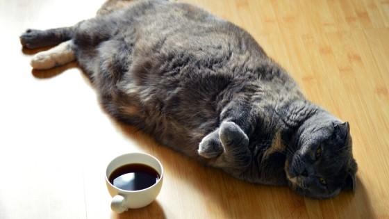 7 สัญญาณบอกเหตุว่า แมวท้อง
