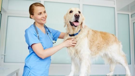 การวิวินิจฉัยอาการ หมาหายใจแรง