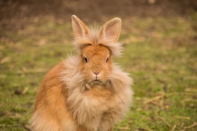 กระต่ายขนร่วง ไม่รู้จะทำยังไงดี เรามีคำตอบ