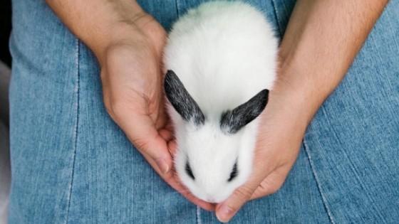 การเลี้ยงกระต่ายในแต่ละช่วง อายุกระต่าย