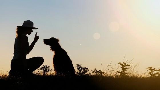 วิธีฝึกสุนัข ให้น้องหมาทำตามคำสั่งขั้นพื้นฐาน