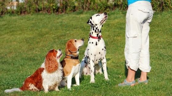 วิธีฝึกสุนัขขั้นพื้นฐาน : ฝึกสุนัขให้นั่ง