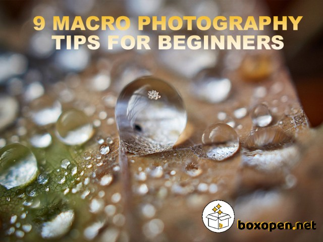 9 Macro Photography Tips for Beginners (Ideas Included)