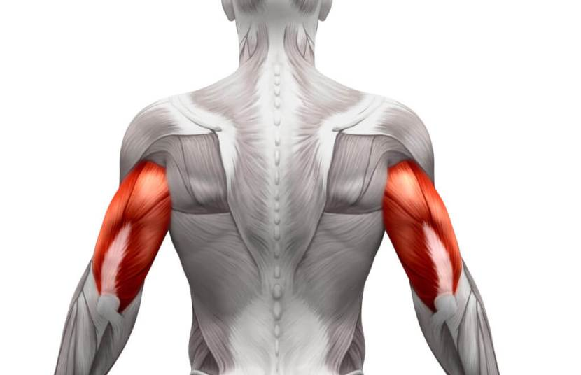 Tricep-Muscle-Anatomy-1024x661