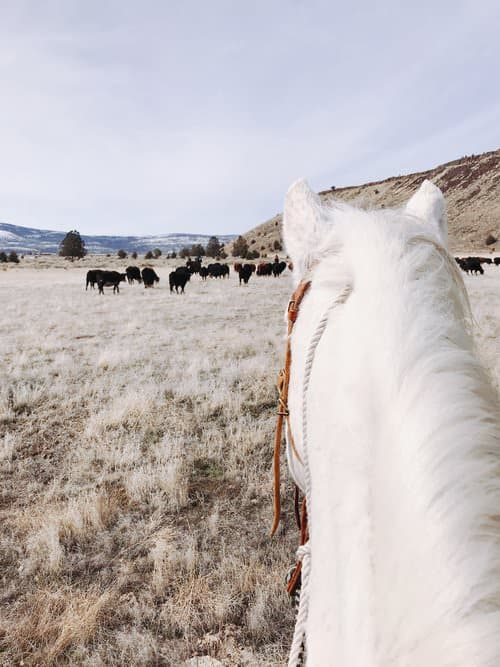 """This Week on the Ranch"" is a weekly series sharing snippets and stories from life on the range."