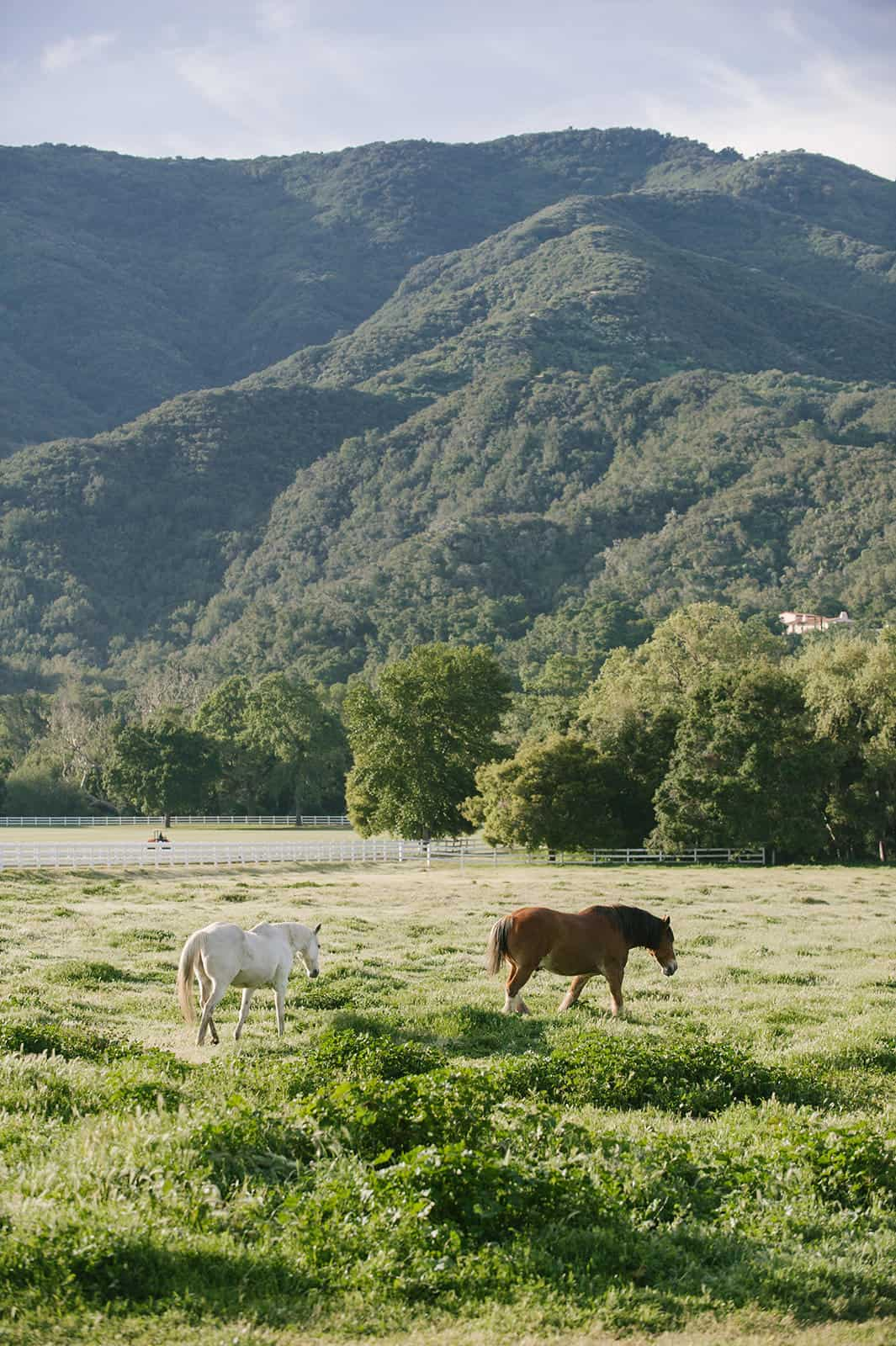 If you follow along on Instagram, you might have seen snippets from my recent trip to Santa Ynez in southern California as we celebrated the launch of Pacific Natural by Jenni Kayne. Today I am excited to share more details and photos!