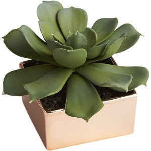 potted-succulent-with-copper-pot