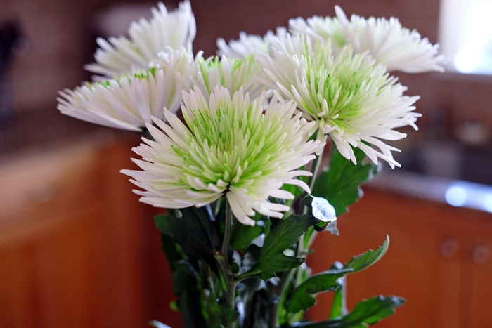 Boxy Colonial Spring Home Tour--mums