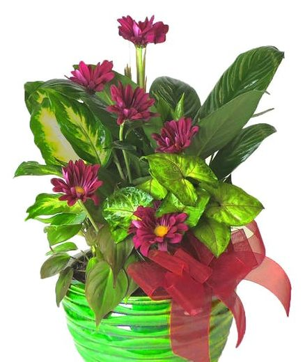 Send A Live Plant To Someone Who Is Sick Boyds Flowers
