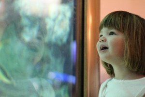 Our guide to fun at the Shedd Aquarium
