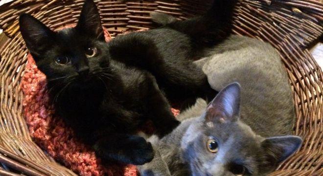 Kittens in a basket.