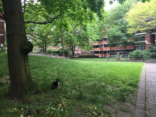 An English cat pauses in a park.