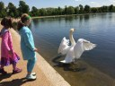 With a swan on Round Lake.