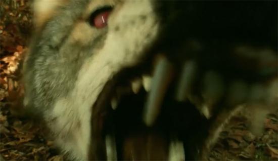 helen keller vs nightwolves wolf