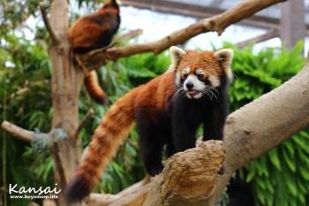 神戶動物王國|水豚、袋鼠任你摸,零距離的生態觀察教室