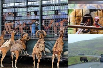 九州自然野生動物園|搭上叢林巴士來趟非洲狩獵之旅吧!