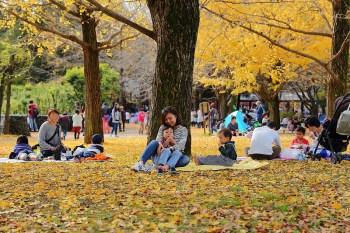 國營昭和紀念公園 東京親子遊賞銀杏紅葉首選