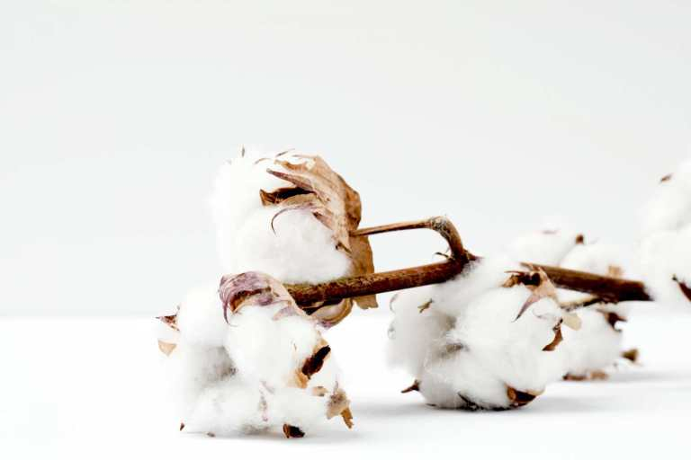 Is Organic Cotton Good For Eczema?