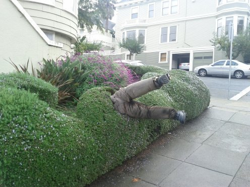 Hilarious! (Well, except from the perspective of the damage to this meticulously maintained rosemary hedge on Castro/Liberty.) Half a scarecrow that's been floating around the 'hood since Halloween. :)