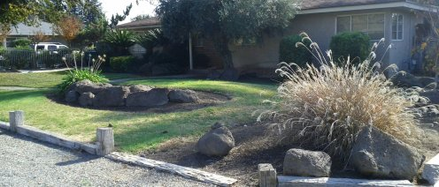 Same house as the cycad pic. Nice and simple presentation.