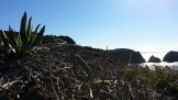 Lots of invasive iceplant on the headlands.